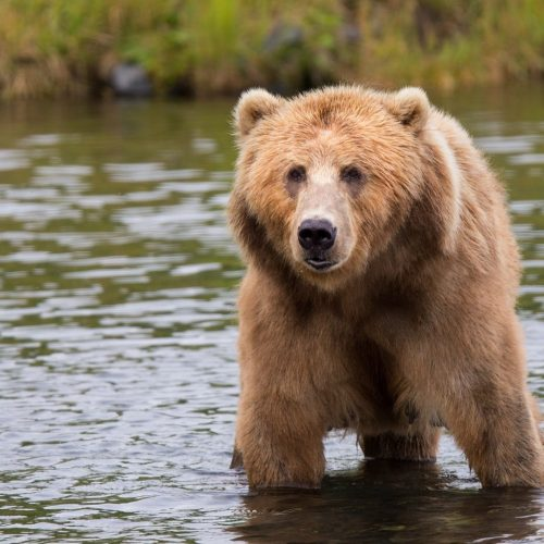 animal-animal-photography-bear-158109
